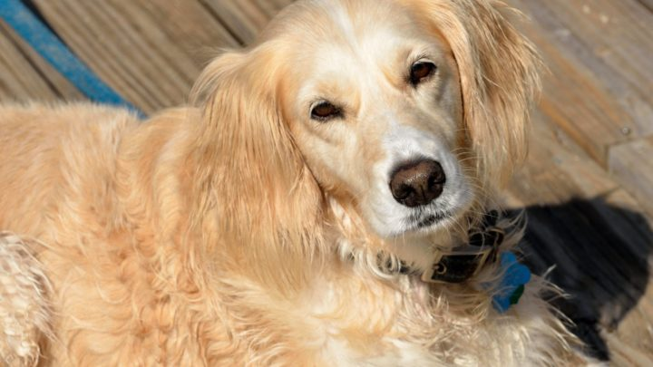 Everything You Need to Know About Pet Boarding